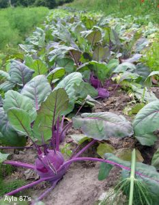 jardin légumes