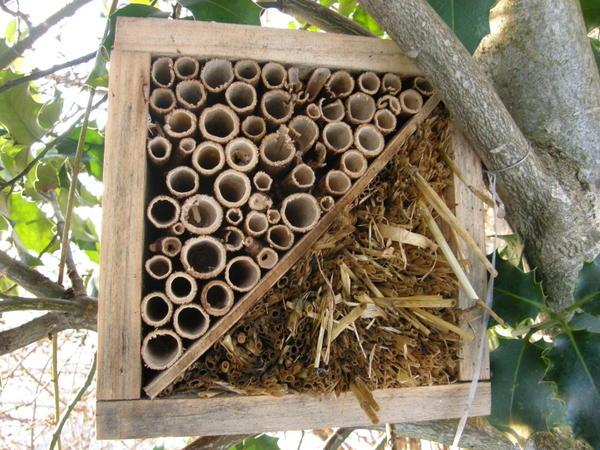 Renou e du japon l invasive aux multiples usages epinal for Hotel a insecte acheter